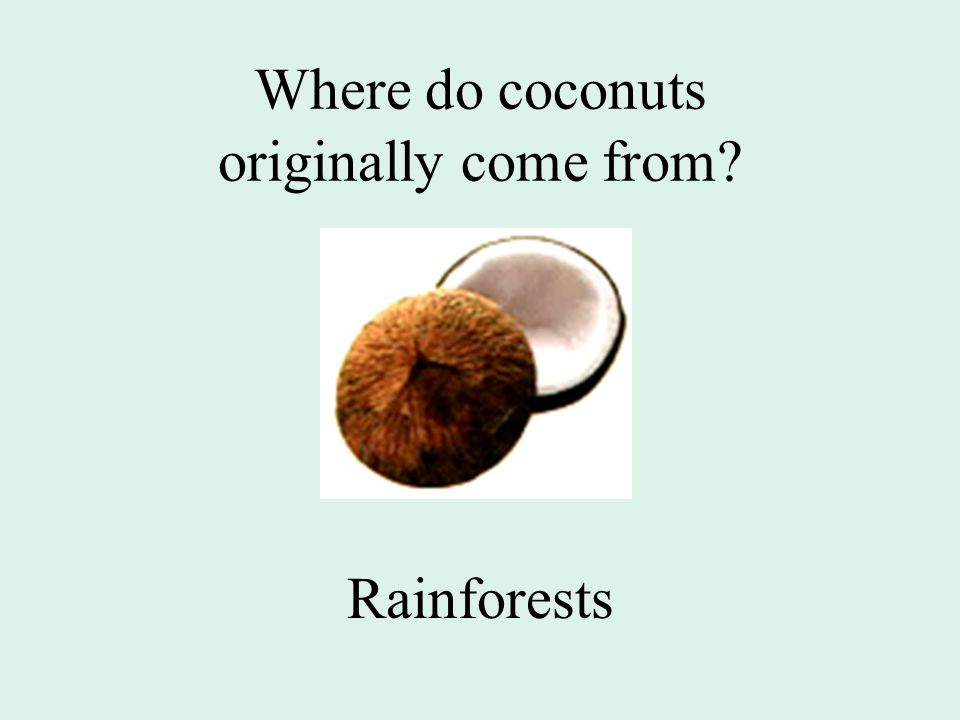 Where do coconuts originally come from Rainforests