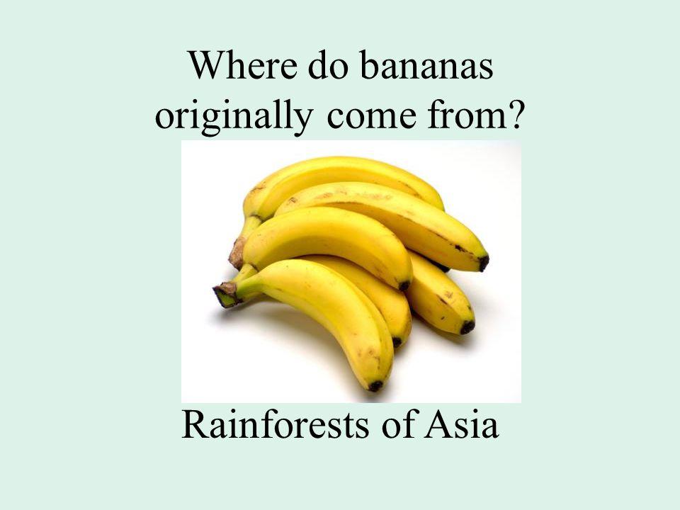 Where do bananas originally come from? Rainforests of Asia