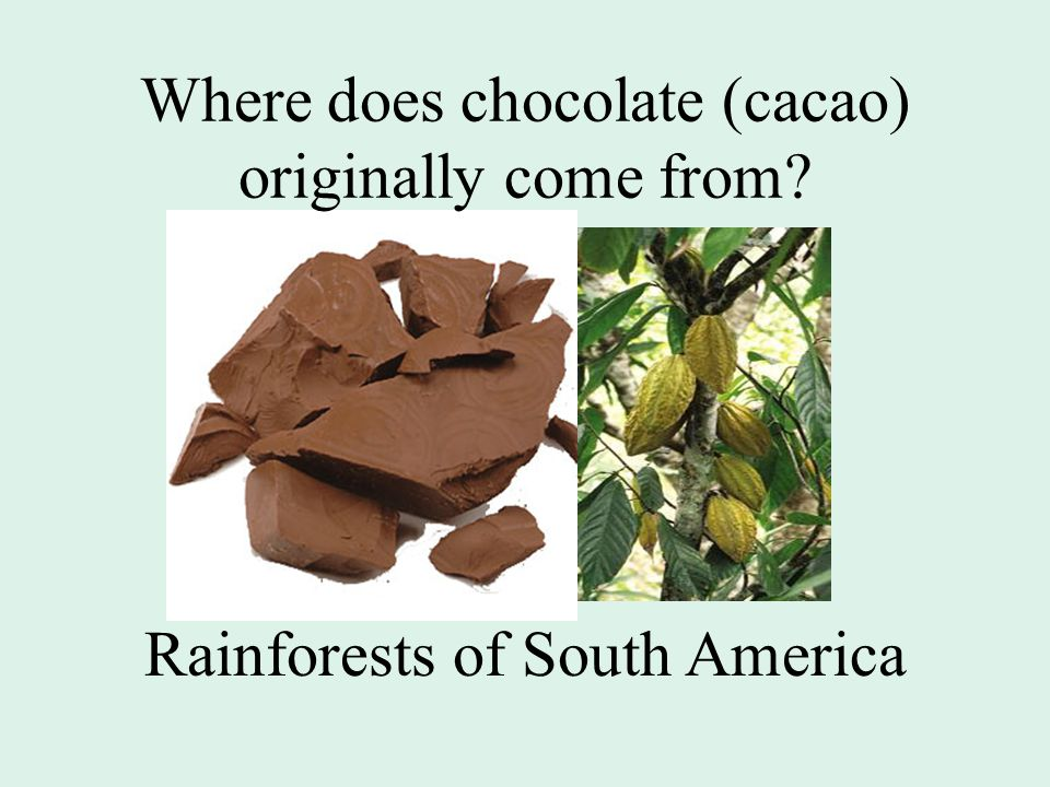 Where does chocolate (cacao) originally come from Rainforests of South America