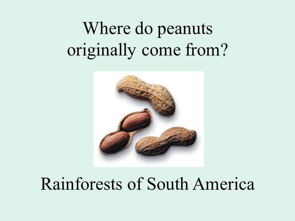 Where do peanuts originally come from Rainforests of South America