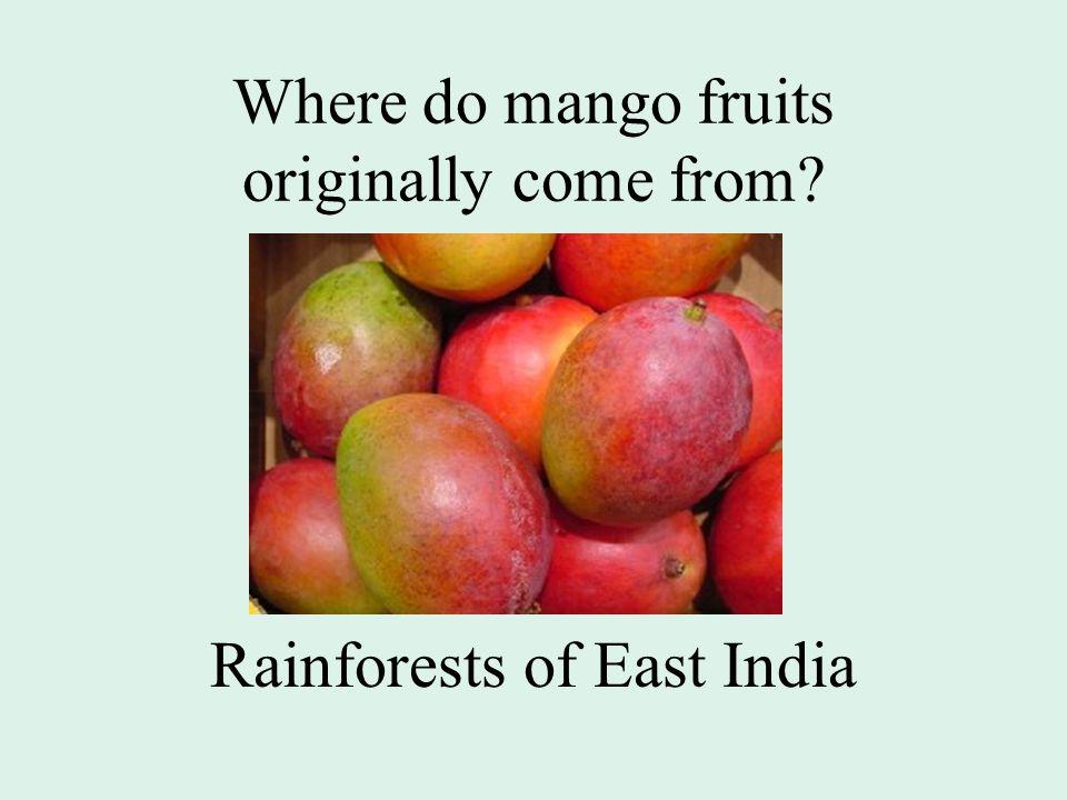 Where do mango fruits originally come from Rainforests of East India