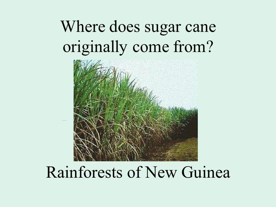 Where does sugar cane originally come from Rainforests of New Guinea