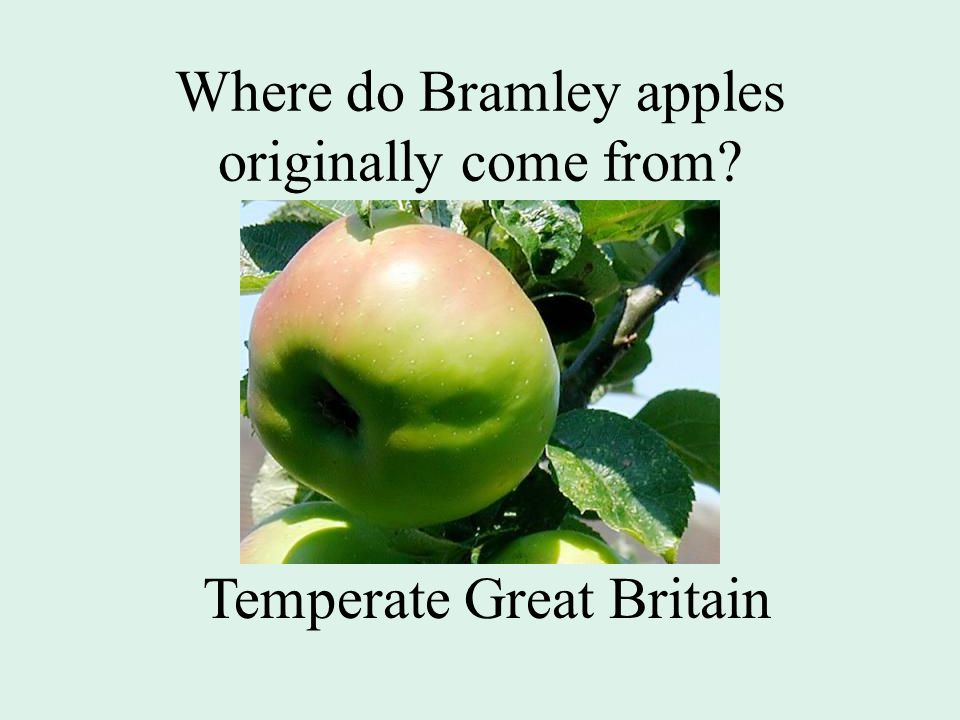 Where do Bramley apples originally come from Temperate Great Britain