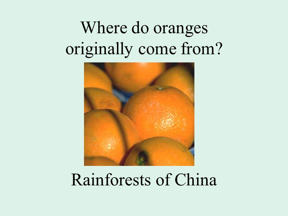 Where do oranges originally come from Rainforests of China