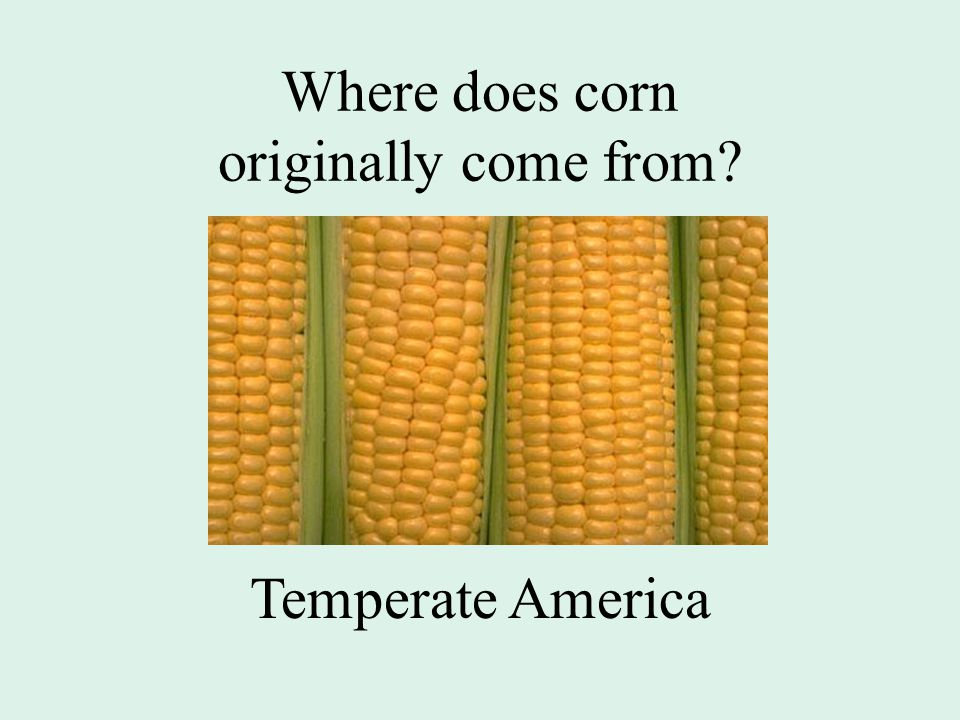 Where does corn originally come from Temperate America