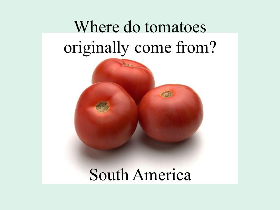 Where do tomatoes originally come from? South America