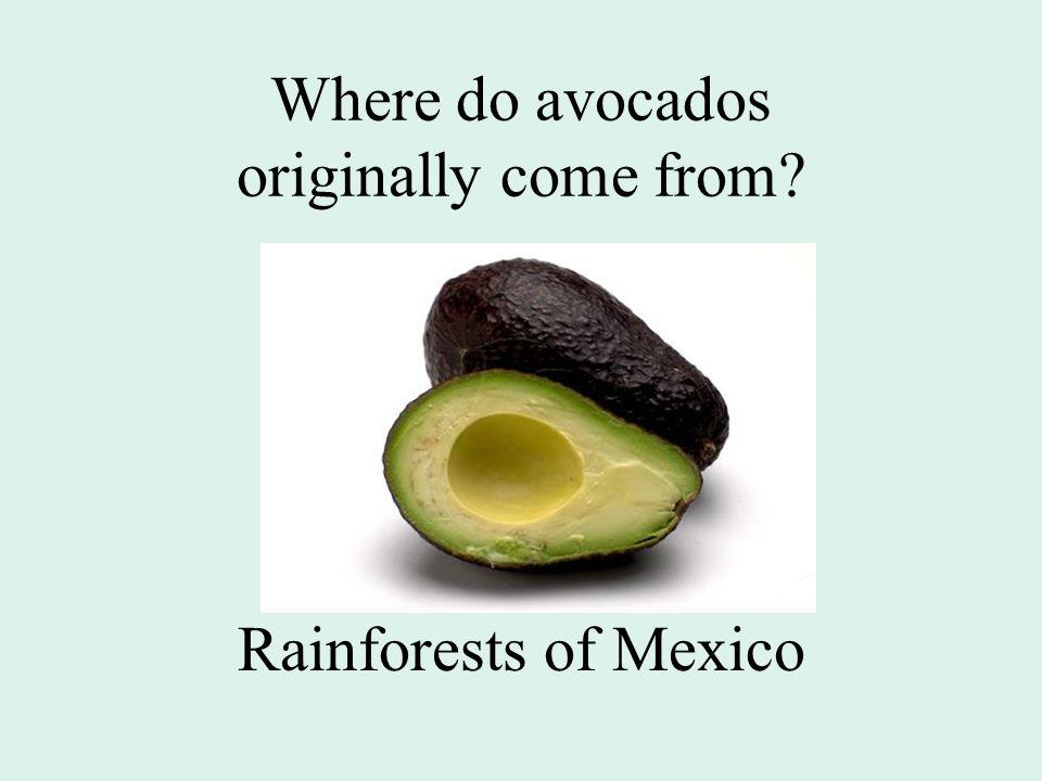Where do avocados originally come from? Rainforests of Mexico