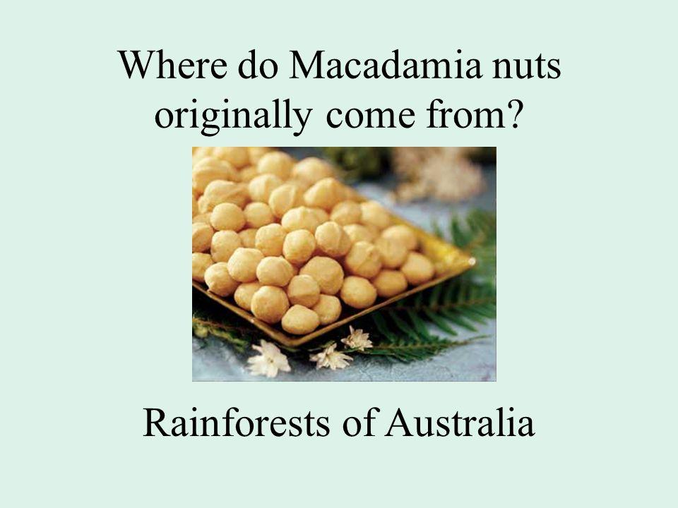 Where do Macadamia nuts originally come from? Rainforests of Australia