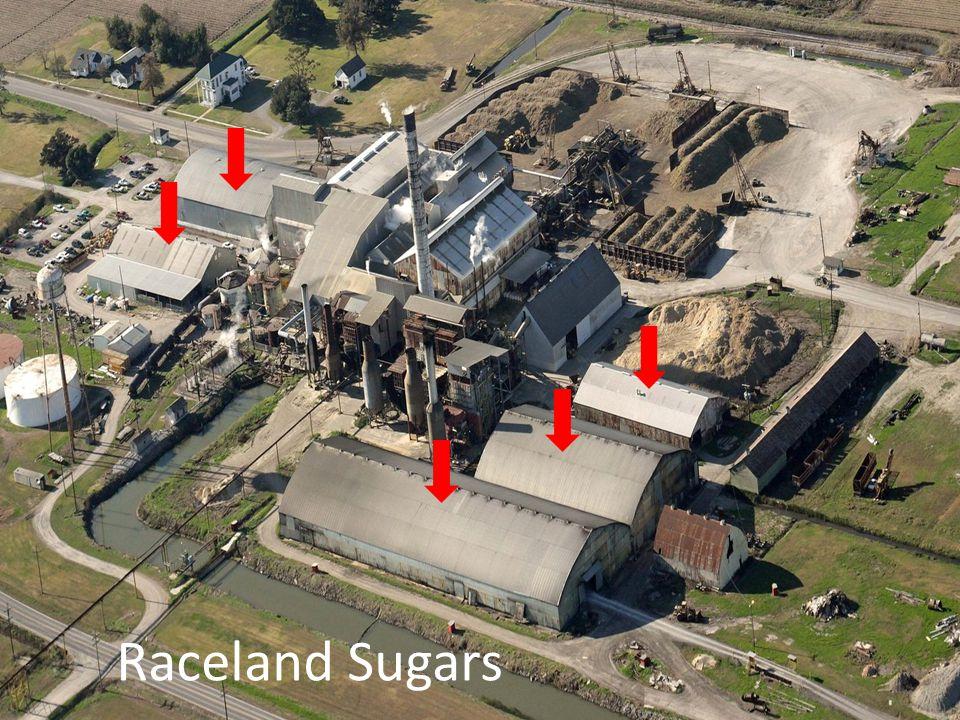 Raceland Sugars
