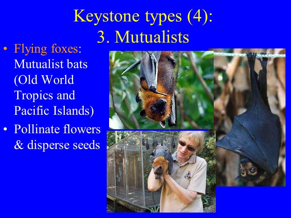 Keystone types (4): 3.
