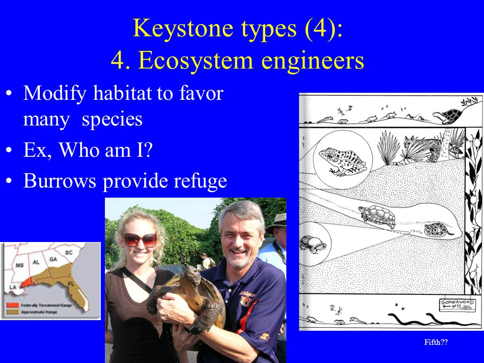 Keystone types (4): 4. Ecosystem engineers Modify habitat to favor many species Ex, Who am I.