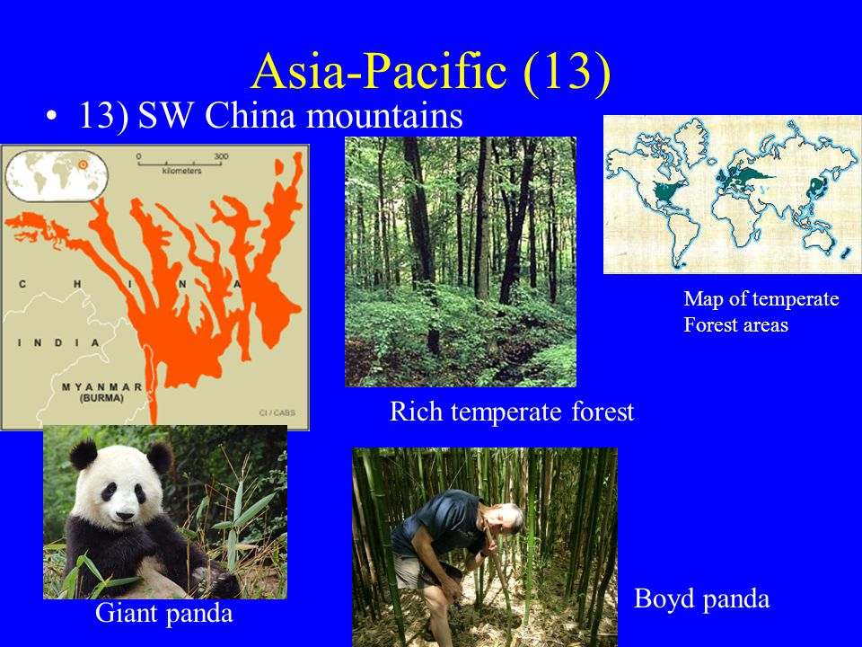 Asia-Pacific (13) 13) SW China mountains Rich temperate forest Giant panda Map of temperate Forest areas Boyd panda