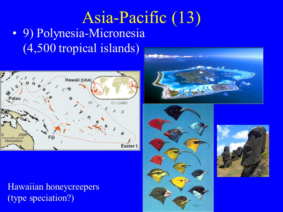 Asia-Pacific (13) 9) Polynesia-Micronesia (4,500 tropical islands) Hawaiian honeycreepers (type speciation )