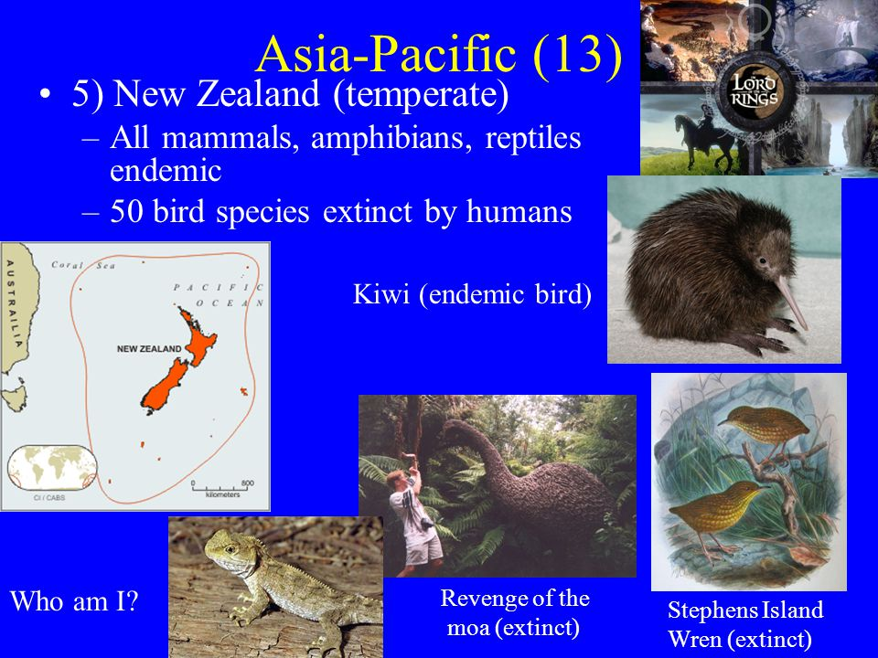 Asia-Pacific (13) 5) New Zealand (temperate) –All mammals, amphibians, reptiles endemic –50 bird species extinct by humans Kiwi (endemic bird) Who am I.