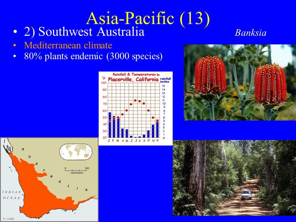 Asia-Pacific (13) 2) Southwest Australia Mediterranean climate 80% plants endemic (3000 species) Banksia