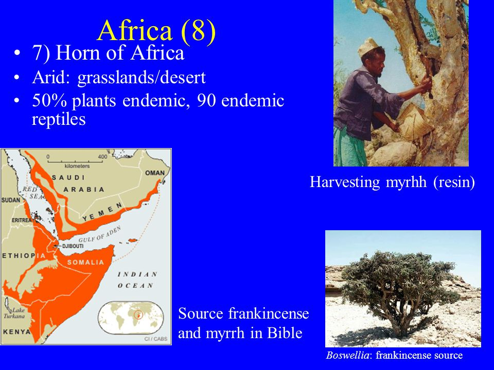 Africa (8) 7) Horn of Africa Arid: grasslands/desert 50% plants endemic, 90 endemic reptiles Source frankincense and myrrh in Bible Boswellia: frankincense source Harvesting myrhh (resin)