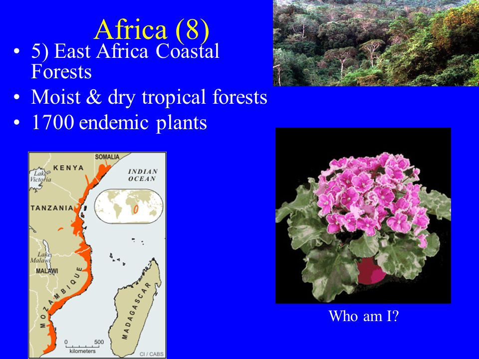 Africa (8) 5) East Africa Coastal Forests Moist & dry tropical forests 1700 endemic plants Who am I