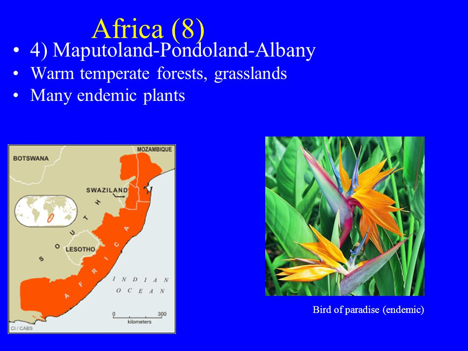 Africa (8) 4) Maputoland-Pondoland-Albany Warm temperate forests, grasslands Many endemic plants Bird of paradise (endemic)