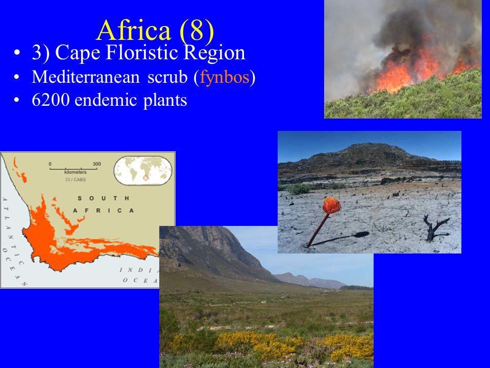 Africa (8) 3) Cape Floristic Region Mediterranean scrub (fynbos) 6200 endemic plants