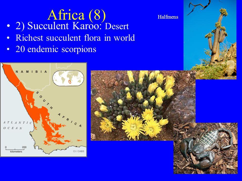Africa (8) 2) Succulent Karoo: Desert Richest succulent flora in world 20 endemic scorpions Halfmens