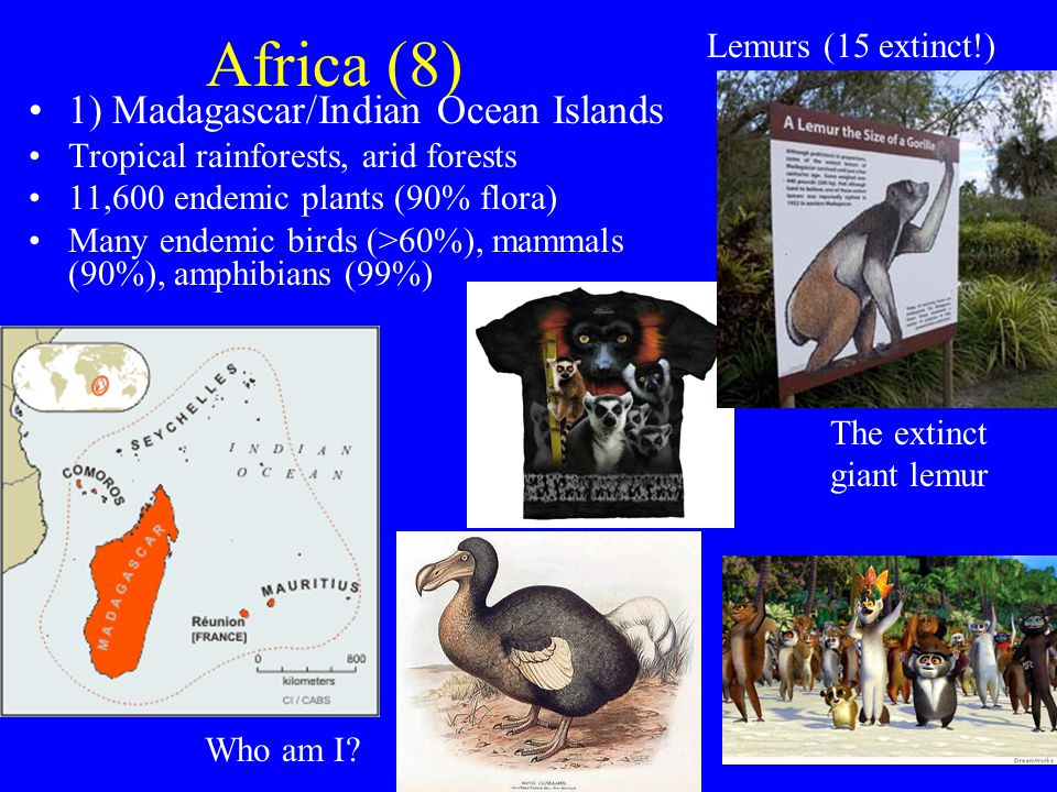 Africa (8) 1) Madagascar/Indian Ocean Islands Tropical rainforests, arid forests 11,600 endemic plants (90% flora) Many endemic birds (>60%), mammals (90%), amphibians (99%) Lemurs (15 extinct!) The extinct giant lemur Who am I