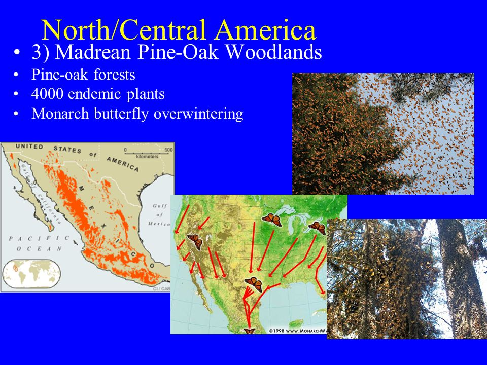 North/Central America 3) Madrean Pine-Oak Woodlands Pine-oak forests 4000 endemic plants Monarch butterfly overwintering