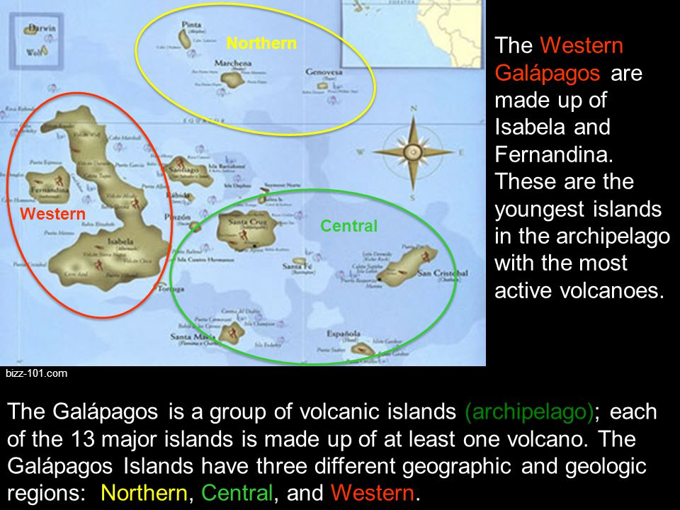 """The Northern Galápagos is made up of Wolf, Darwin, Pinta, Marchena, and Genovesa islands. These islands may have formed from the hotspot """"leaking"""" nor"""