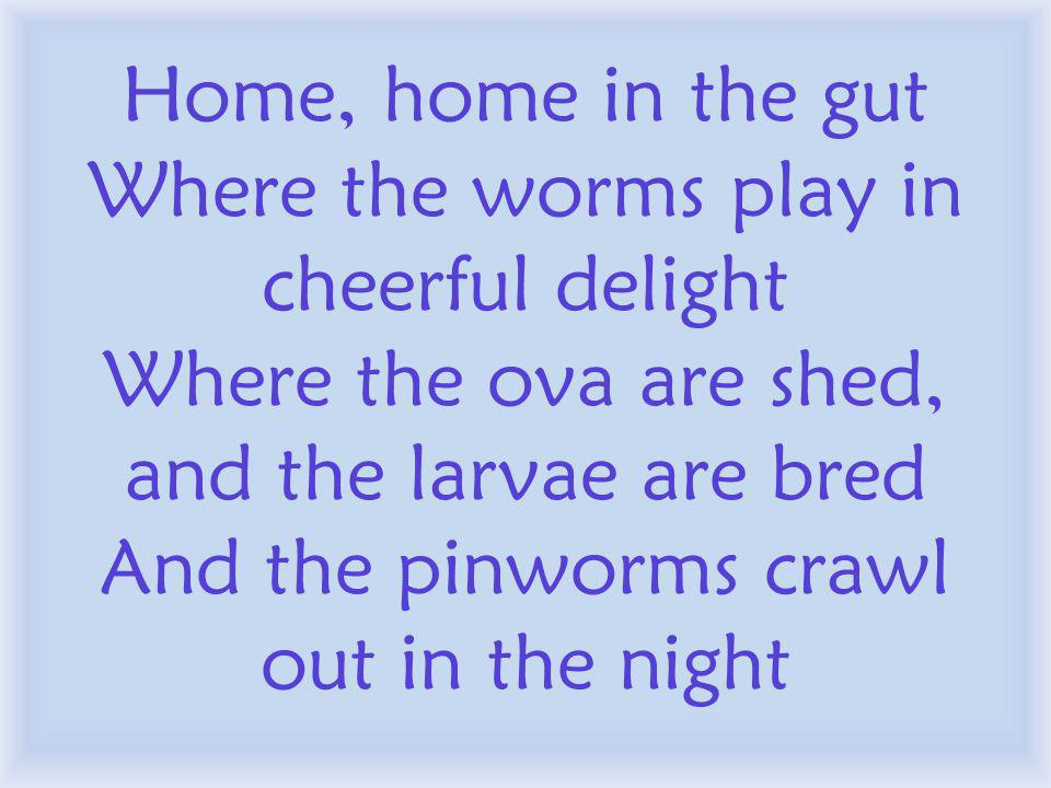 Home, home in the gut Where the worms play in cheerful delight Where the ova are shed, and the larvae are bred And the pinworms crawl out in the night