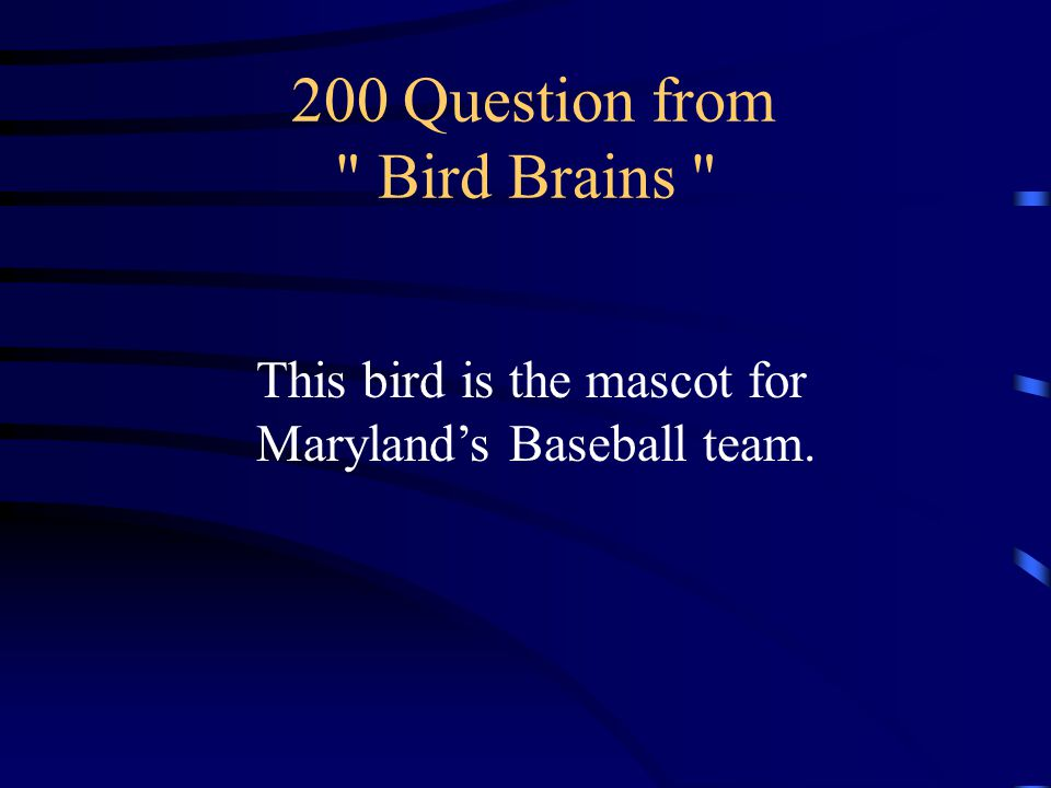 100 Answer from Bird Brains What are the Seahawks