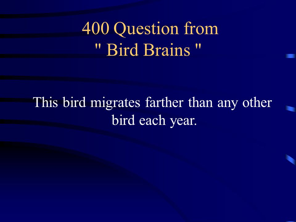 300 Answer from Bird Brains What are the Atlanta Thrashers