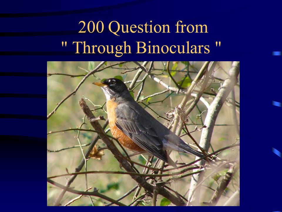 100 Answer from Through Binoculars What is an American Crow
