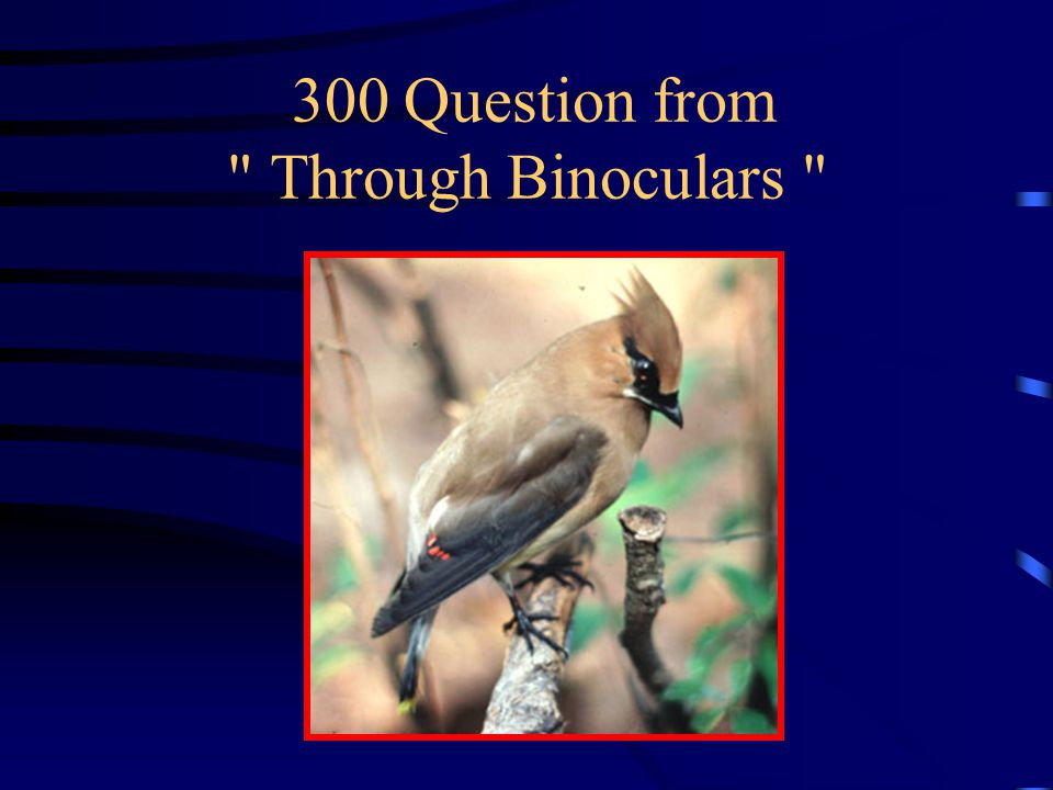 200 Answer from Through Binoculars What is an American Robin