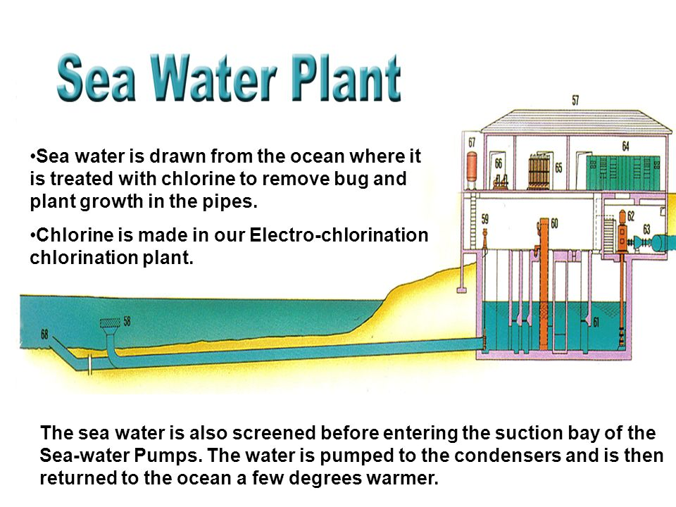 Sea water is drawn from the ocean where it is treated with chlorine to remove bug and plant growth in the pipes.