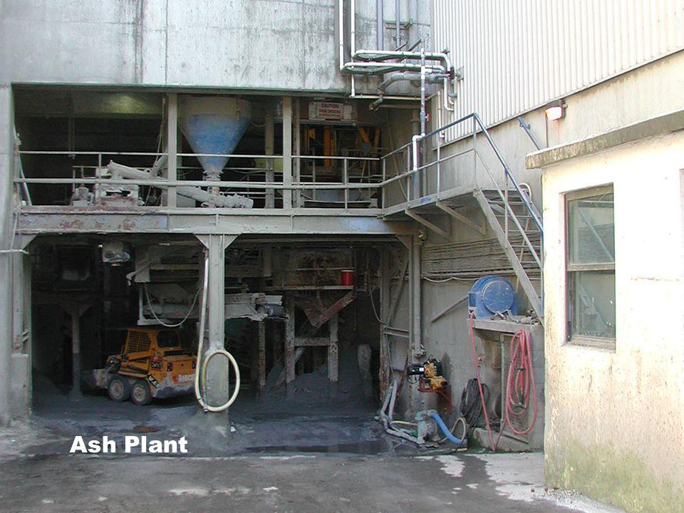 Ash Plant