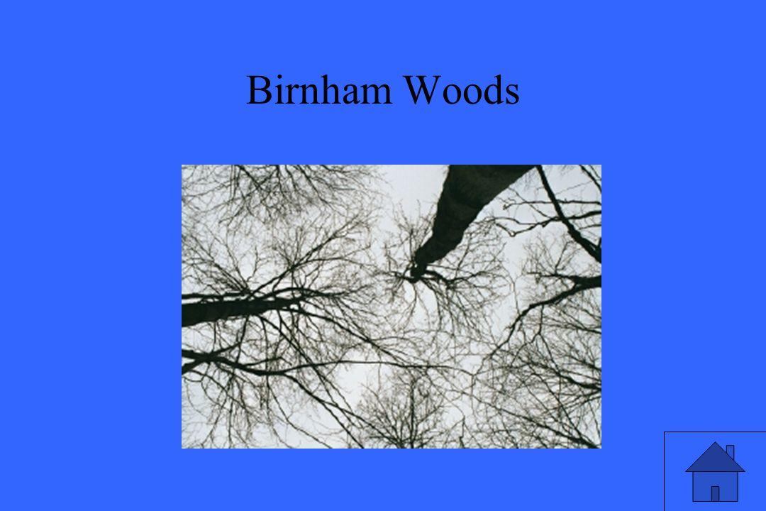 Birnham Woods
