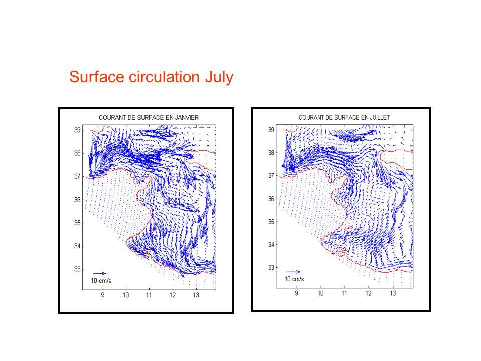 Surface circulation July
