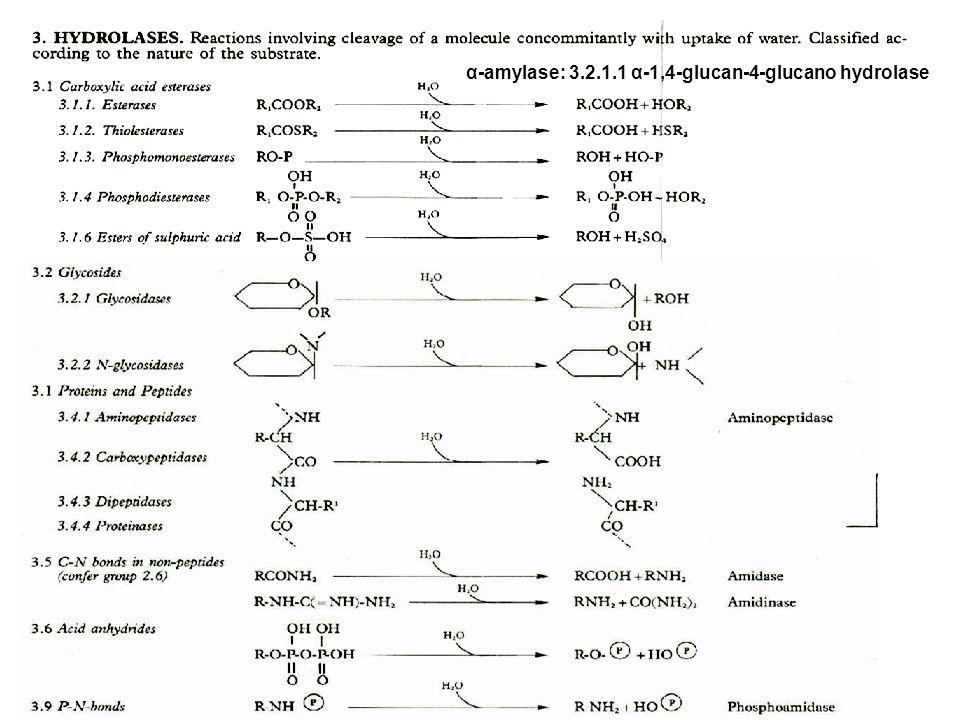 α-amylase: 3.2.1.1 α-1,4-glucan-4-glucano hydrolase