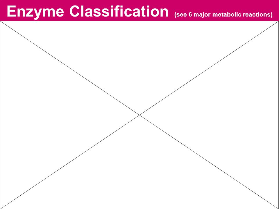 Enzyme Classification (see 6 major metabolic reactions)