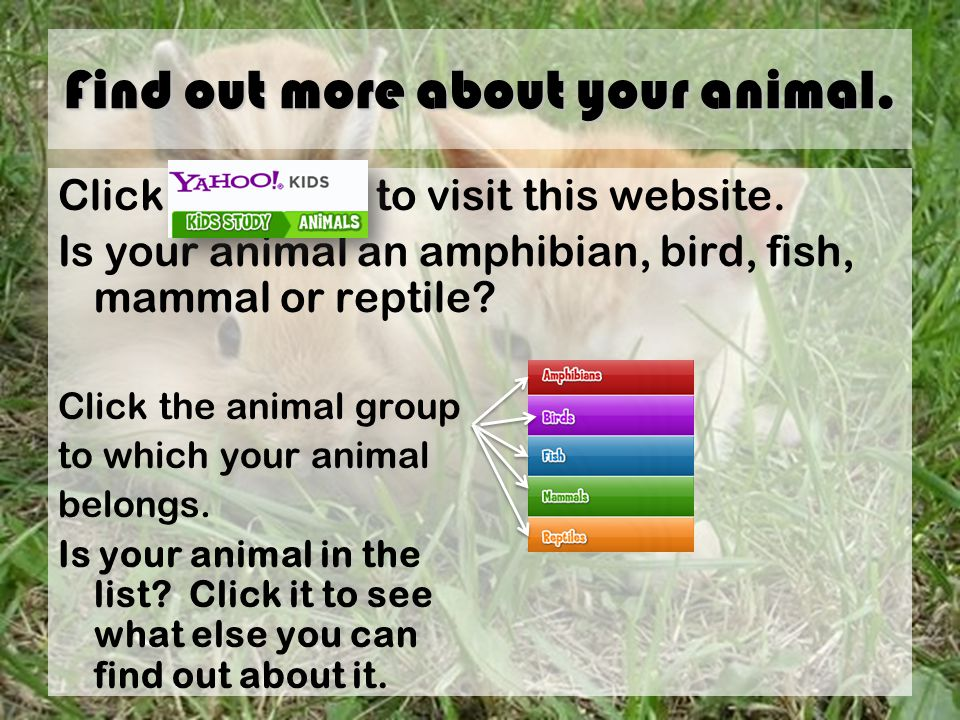 Find out more about your animal. Click to visit this website.