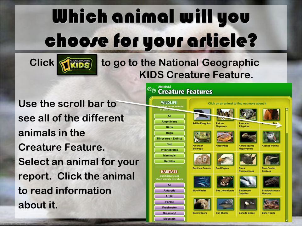 Which animal will you choose for your article.