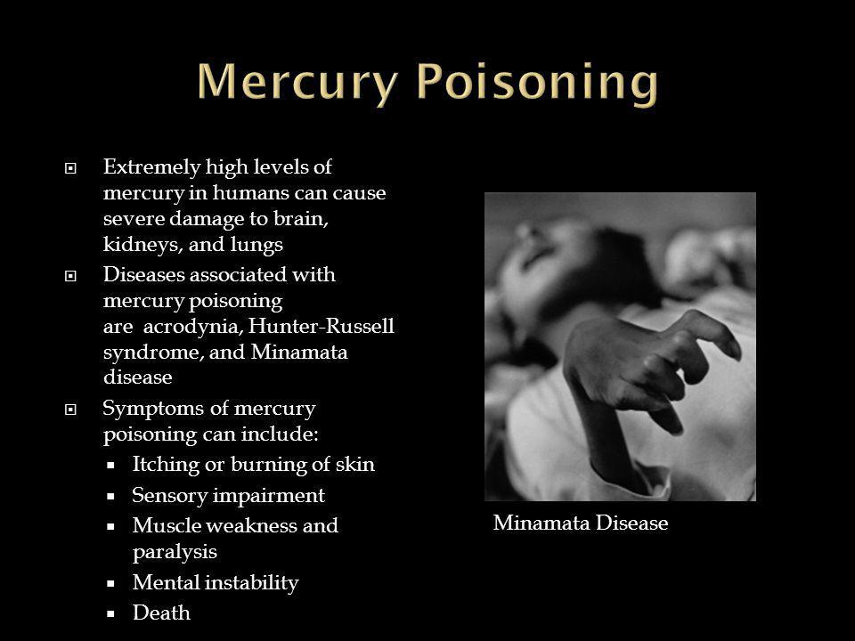  Extremely high levels of mercury in humans can cause severe damage to brain, kidneys, and lungs  Diseases associated with mercury poisoning are acrodynia, Hunter-Russell syndrome, and Minamata disease  Symptoms of mercury poisoning can include:  Itching or burning of skin  Sensory impairment  Muscle weakness and paralysis  Mental instability  Death Minamata Disease