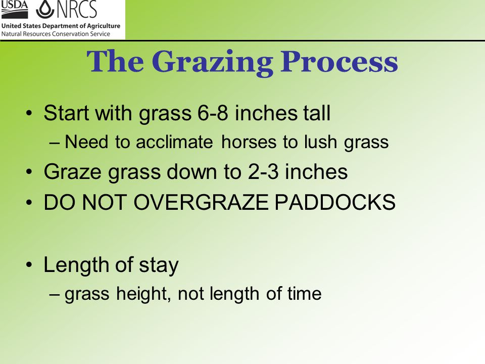 The Grazing Process Start with grass 6-8 inches tall –Need to acclimate horses to lush grass Graze grass down to 2-3 inches DO NOT OVERGRAZE PADDOCKS