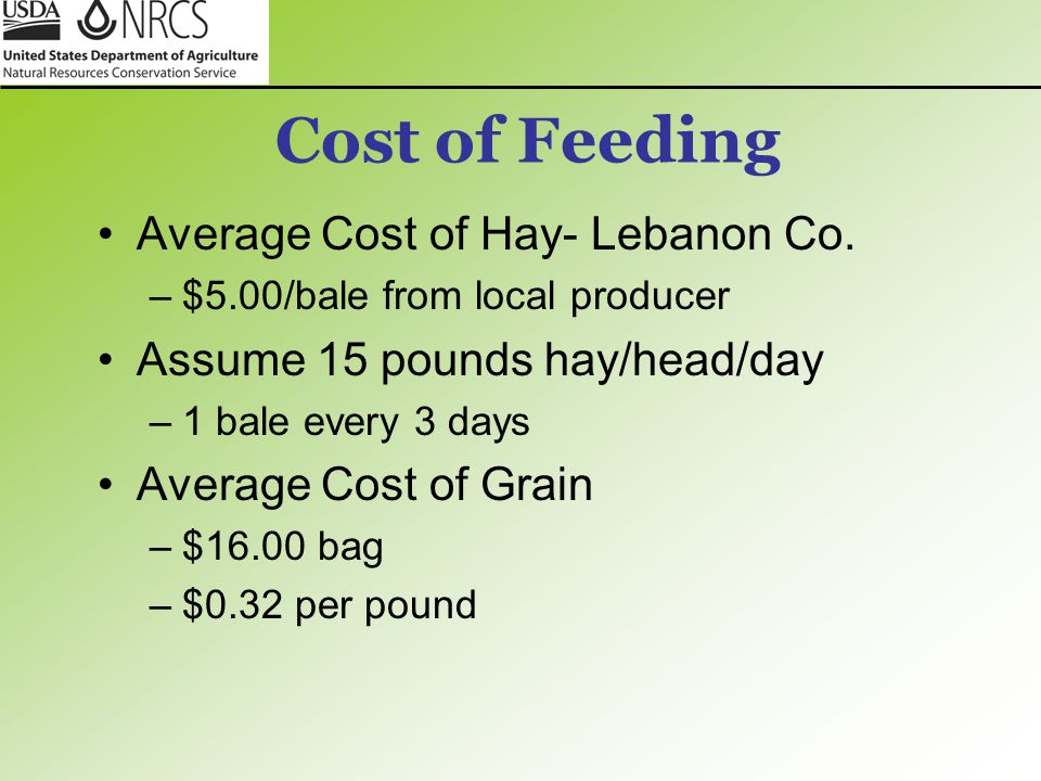 Cost of Feeding Average Cost of Hay- Lebanon Co. –$5.00/bale from local producer Assume 15 pounds hay/head/day –1 bale every 3 days Average Cost of Gr