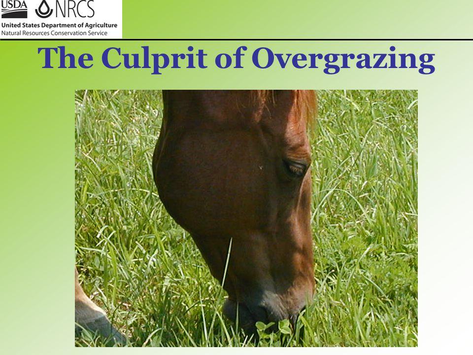 The Culprit of Overgrazing