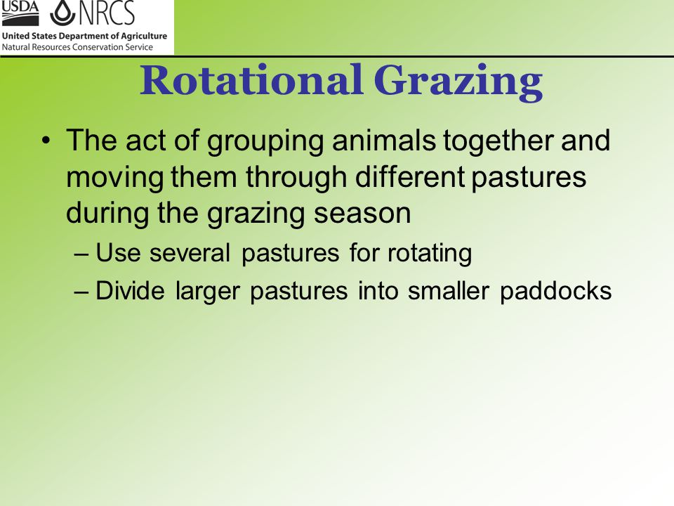 Rotational Grazing The act of grouping animals together and moving them through different pastures during the grazing season –Use several pastures for