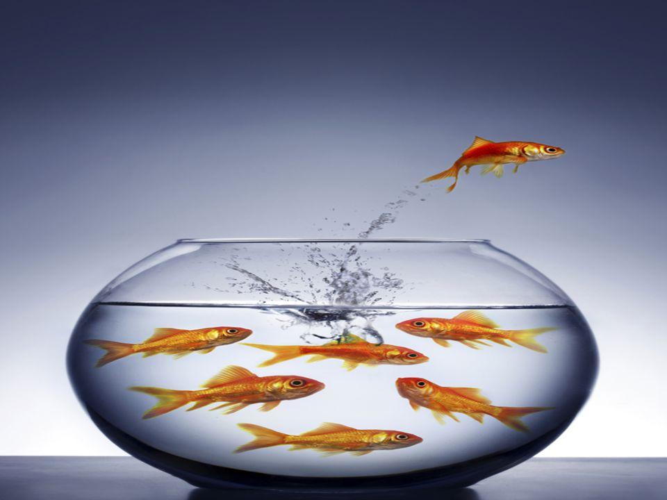 كن كهذه السمكة.....متميزا.... غير نفسك اولا لتتمكن من تغيير الاخرين.....