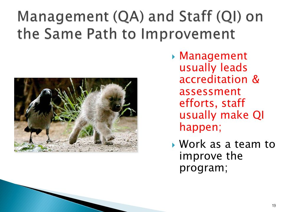  Management usually leads accreditation & assessment efforts, staff usually make QI happen;  Work as a team to improve the program; 19