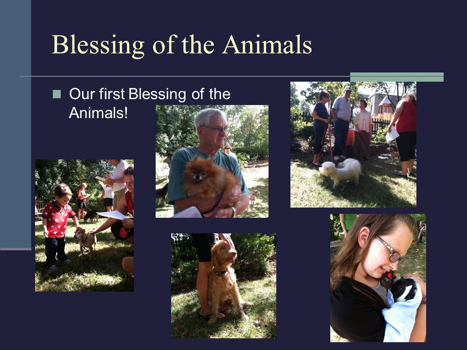Blessing of the Animals Our first Blessing of the Animals!