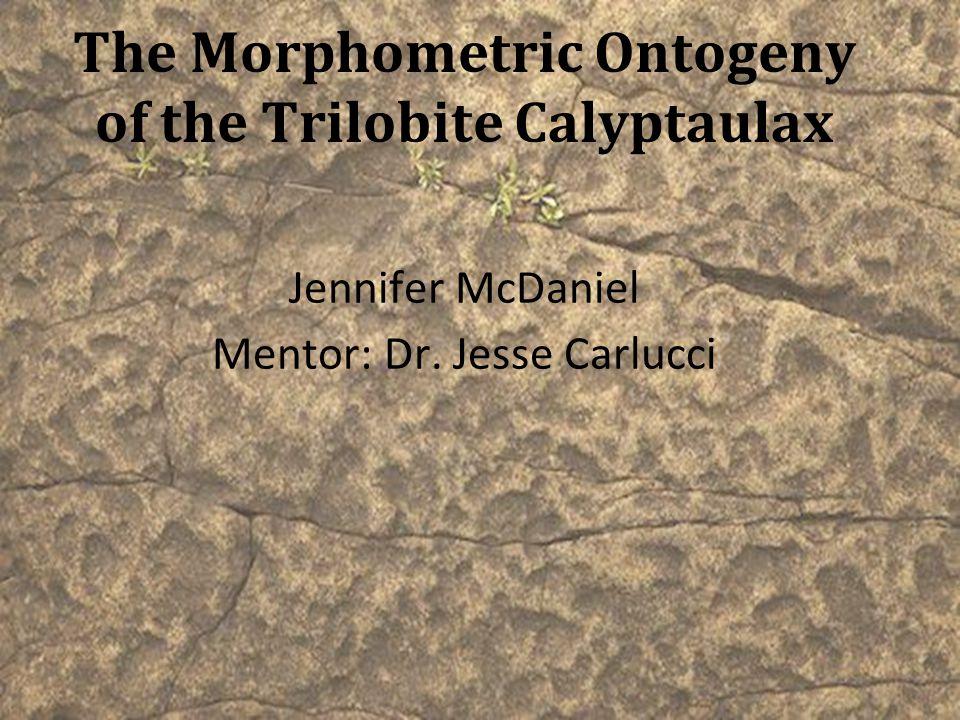 The Morphometric Ontogeny of the Trilobite Calyptaulax Jennifer McDaniel Mentor: Dr. Jesse Carlucci