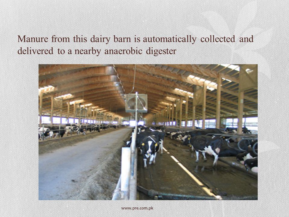 www.pre.com.pk Manure from this dairy barn is automatically collected and delivered to a nearby anaerobic digester